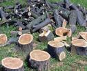 Obrazek do artykułu: Kiedy nie jest pobierana opłata za usunięcie drzew i krzewów?