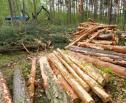 Obrazek do artykułu: Resort środowiska żąda od władz Warszawy informacji o wycince drzew w latach 2014-2016