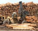 Obrazek do artykułu: Sejmowa komisja poparła poprawki Senatu do noweli ustawy o wycince drzew