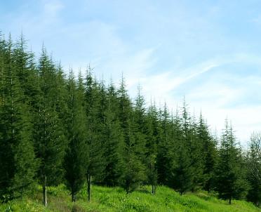 articleImage: Nie każdy las podlega prawu pierwokupu