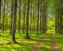 Obrazek do artykułu: MF: kupno nieruchomości od Lasów Państwowych bez PCC