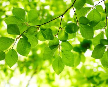 articleImage: Ponad 1800 drzew zostanie posadzonych w Płocku