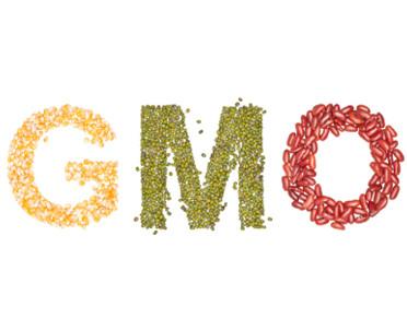 articleImage: Senat za ustawą o przedłużeniu możliwości stosowania pasz z GMO