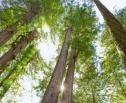 Obrazek do artykułu: Podjęcie zabiegów pielęgnacyjnych pomników przyrody wymaga uchwały rady gminy