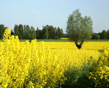articleImage: Zmiany w rolnictwie ekologicznym, zgłoszenia po usunięciu uchybień