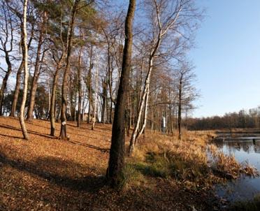 articleImage: Sprawy dot. wycinki drzew z lasu nie należą do kompetencji wójta