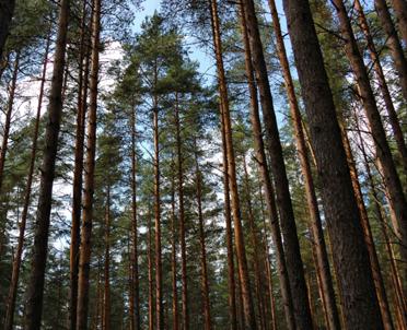 articleImage: Środki finansowe na ochronę lasu przysługują także przed poniesieniem wydatków na ten cel