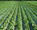 Obrazek do artykułu: Resort rolnictwa myśli o zmianie systemu ubezpieczeń rolnych
