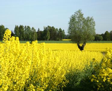 articleImage: Przy ocenie udatności uprawy leśnej należy dokonać oceny założonej uprawy z planem zalesienia