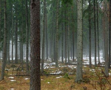 articleImage: Jaki organ jest właściwy do wydania zezwolenia na usunięcie drzew z nieruchomości, której urząd gminy jest posiadaczem samoistnym, a właściciel nieokreślony?