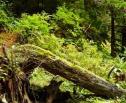 articleImage: Czy można nałożyć karę za wycięcie drzew bez zezwolenia, jeśli Policja nie wszczęła postępowania o ukaranie sprawców?