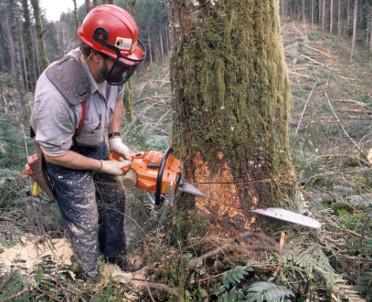 articleImage: Kiedy trzeba zgłosić zamiar usunięcia drzewa?
