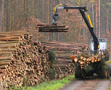 articleImage: Kiedy można wyciąć drzewa z lasu?