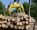 Obrazek do artykułu: Minister uchyla decyzję ws. usuwania drzew w Puszczy Białowieskiej