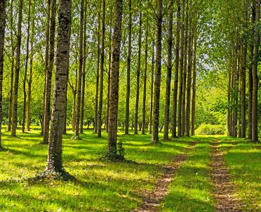 articleImage: Sprzedaż prywatnych lasów też pod kontrolą