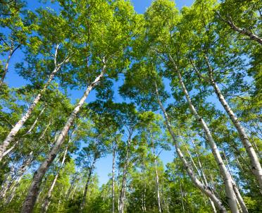 articleImage: Państwo zapewnia środki na ochronę lasu także przed poniesieniem wydatków