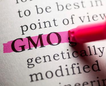 articleImage: Powstanie rejestr upraw GMO