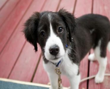 articleImage: Jutro wyrok ws. niewpuszczenia z psem do restauracji