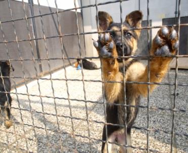 articleImage: Od czwartku wyższe kary za znęcanie się nad zwierzętami
