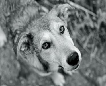 articleImage: Adwokat Topczewska: Ostrzejsze kary dla właścicieli agresywnych psów zasadne