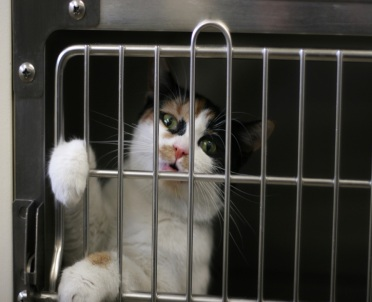 articleImage: Sąd uniewinnił sołtysa obwinionego o brak nadzoru nad kotem