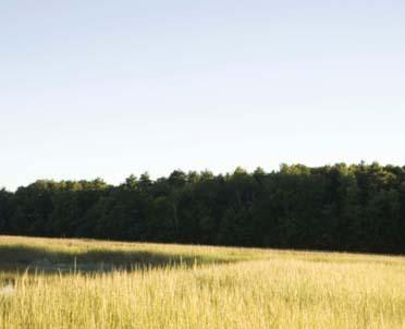 articleImage: Znamy stawki podatku rolnego i leśnego w 2013 r.