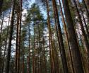 Obrazek do artykułu: Greenpeace apeluje: cała Puszcza Białowieska parkiem narodowym