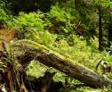 Obrazek do artykułu: NIK: rezerwat Karpaty Wschodnie powinien zyskać prawne umocowanie