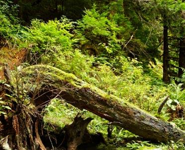 articleImage: Ekolodzy zawiadamiają Prokuratora Generalnego: strażnicy leśni przekroczyli swoje uprawnienia
