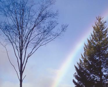 articleImage: Kto składa wniosek o usunięcie drzewa rosnącego na granicy działek?