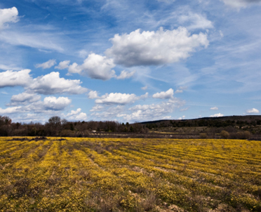 articleImage: W Zabłudowie powstanie ok. 4,5 ha gruntów pod inwestycje