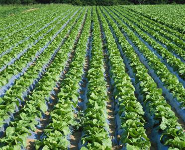 articleImage: Projekt noweli o wspieraniu obszarów wiejskich dotyczy refundacji