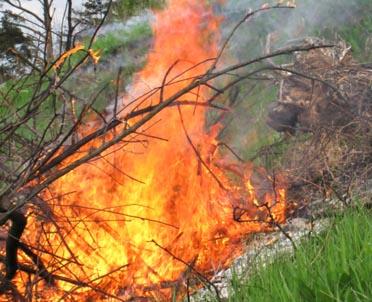 articleImage: Czy na własnej posesji można spalić gałęzie i liście pozostałe po wycięciu drzew?