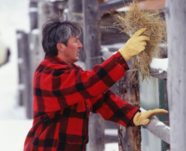 articleImage: Zaliczenie do okresu zatrudnienia okresu pracy w charakterze domownika